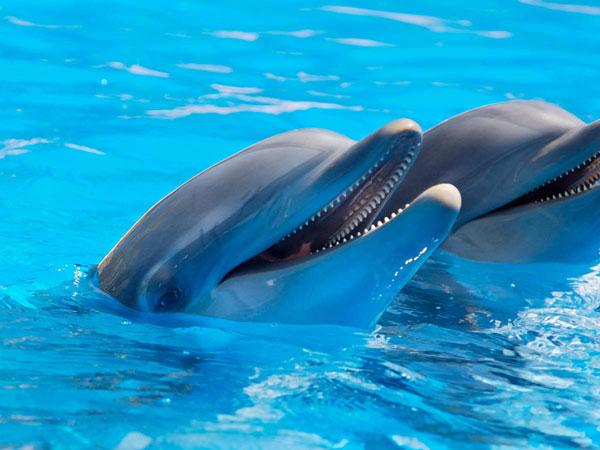 Seaworld Dolphins San Diego